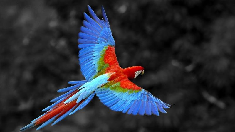 Почему попугая называют попугаем